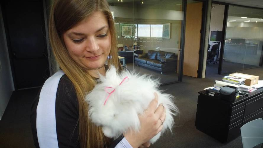 Nissan's Design Center Gets Visit From From Bunz The Bunny