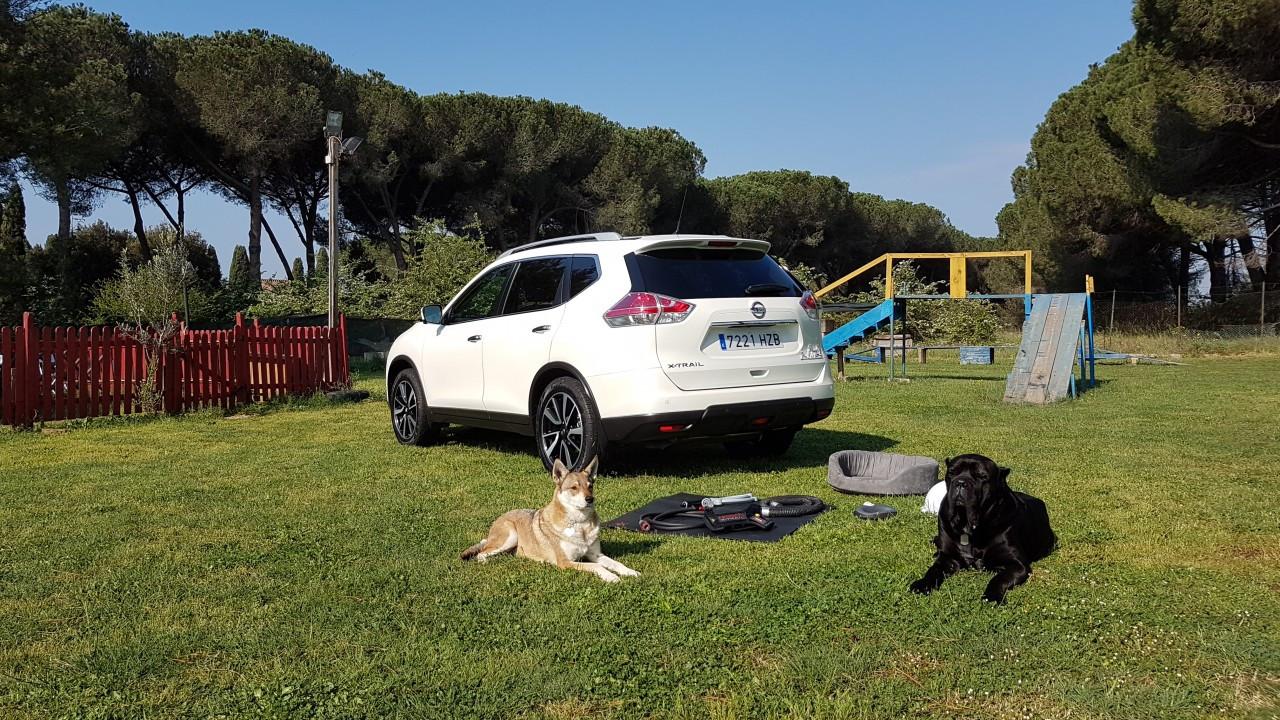 nissan x trail trainer la prima auto amica dei cani italia. Black Bedroom Furniture Sets. Home Design Ideas