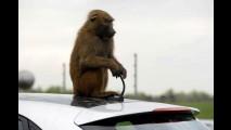 VÍDEO: Hyundai deixa 40 macacos testarem durabilidade do Novo i30