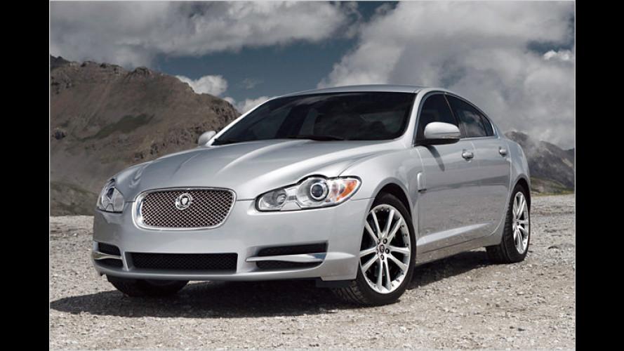Da schnurrt die Katze: Jaguar bietet neue XF-Einsteiger
